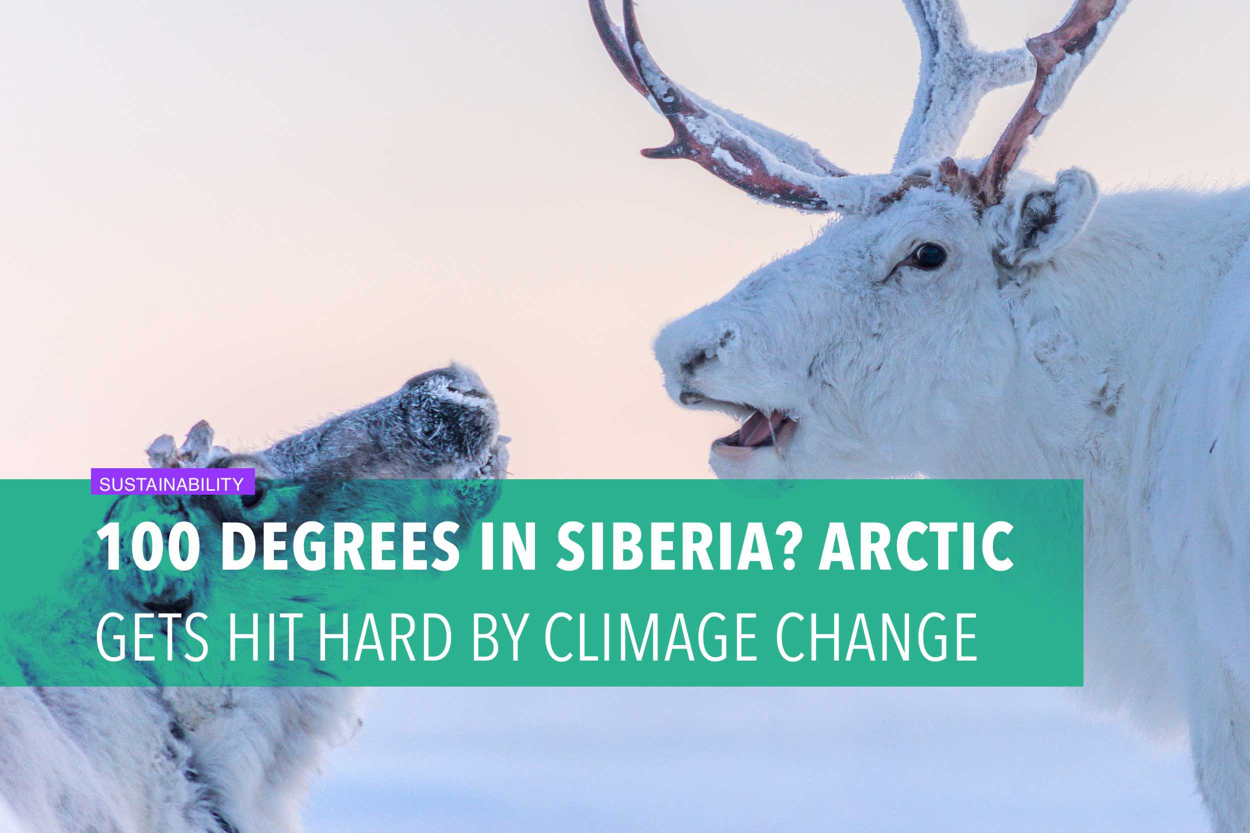 100 degrees in Siberia? Arctic gets hit hard by climate change