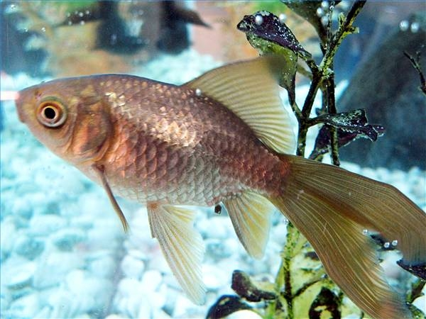 How to Build a Large Aquarium   Cuteness