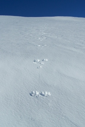 How To Identify Animal Foot Prints Sciencing