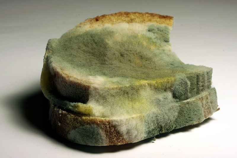 How Does Mold Grow on Bread? | Sciencing