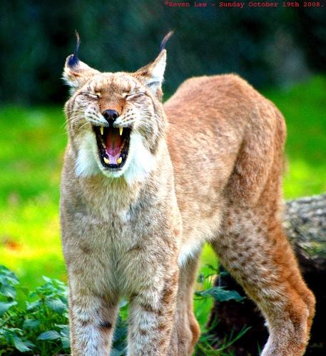 Careers In Wildlife Biology
