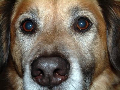 Mebendazole For Dogs Cuteness Com