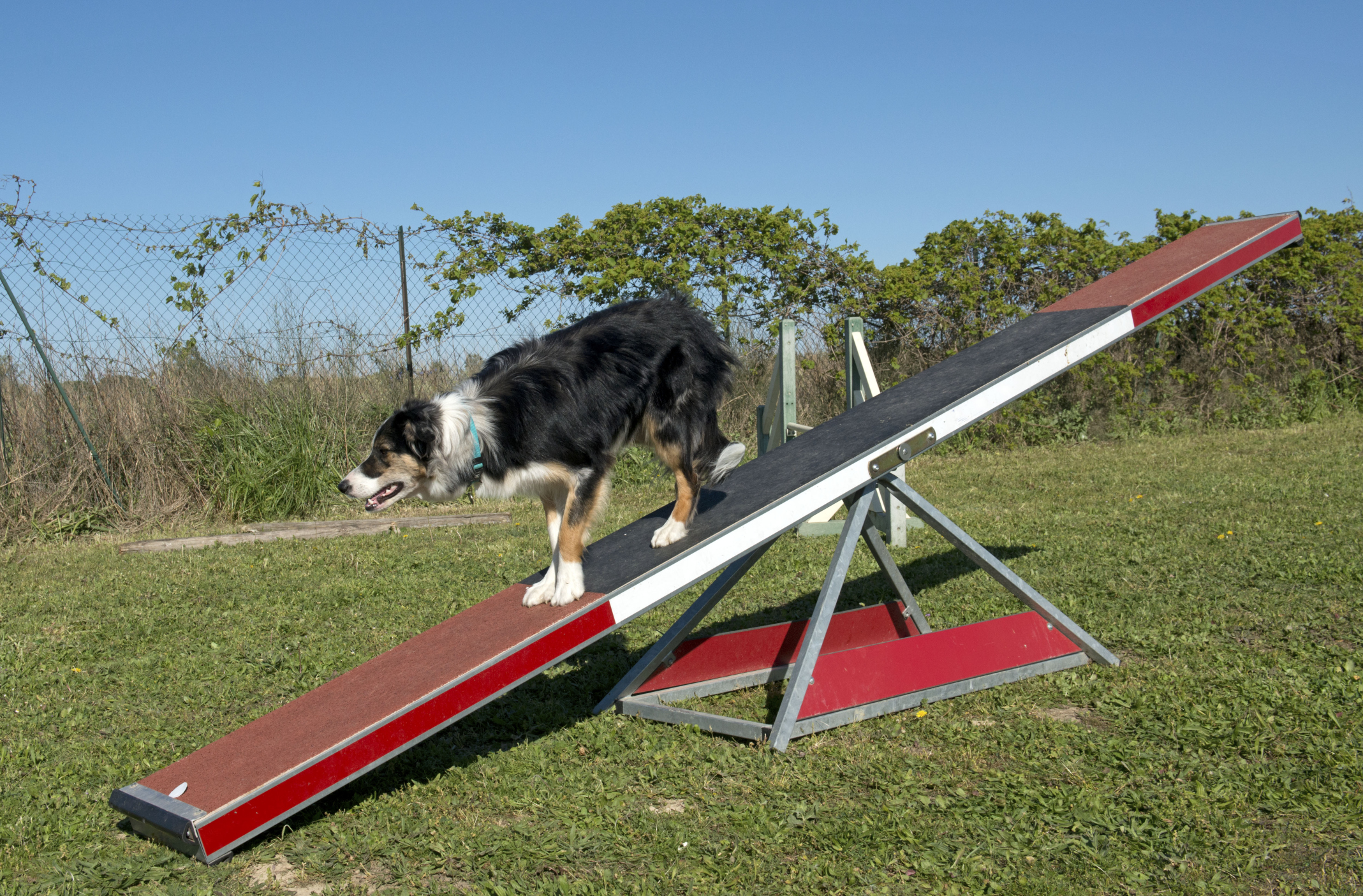 AKC Teeter Board Specifications | Animals - mom.me