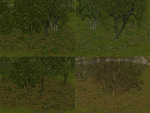 Juju_treebases_fall_winter_cmak_cmmos4