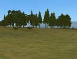 Tal_trees_cmak_cmmos4