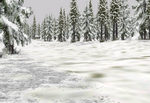 Tall_pines_winter_heavy_snow-ls