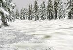 Tall_pines_winter_heavy_snow-ls