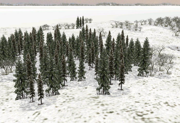 Tall_pines_winter_snow_light-ls