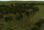Tree-bases_scattered_summer-ls