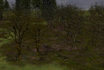 Tree-bases_woods_winter_no_snow-ls