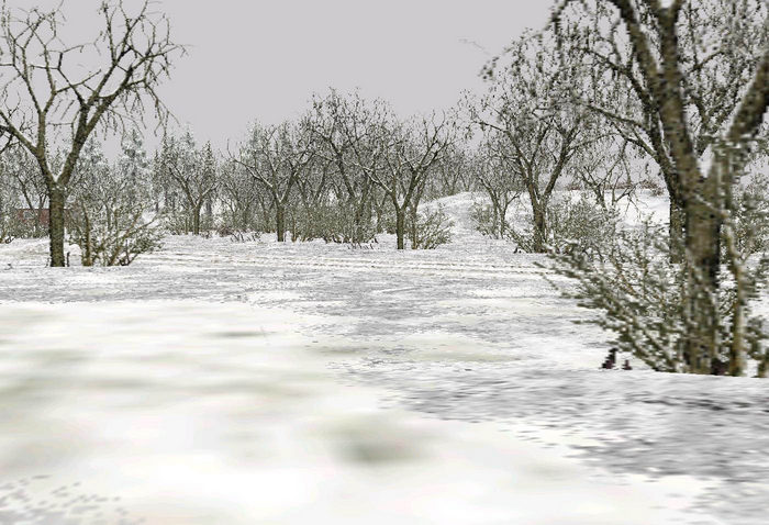 Trees_deciduous_winter_snow-ls