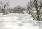 Trees_deciduous_winter_snow-ls