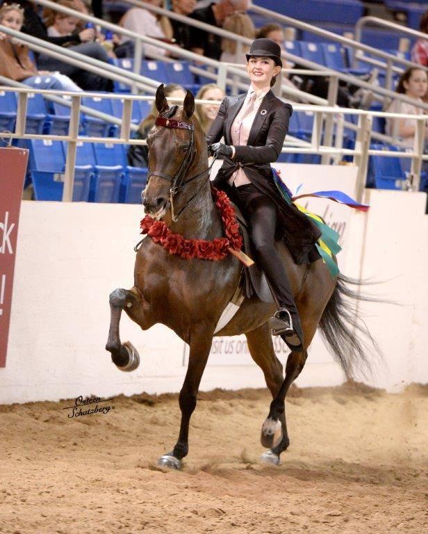 Scottsdale Arabian Horse Show News For Tuesday February