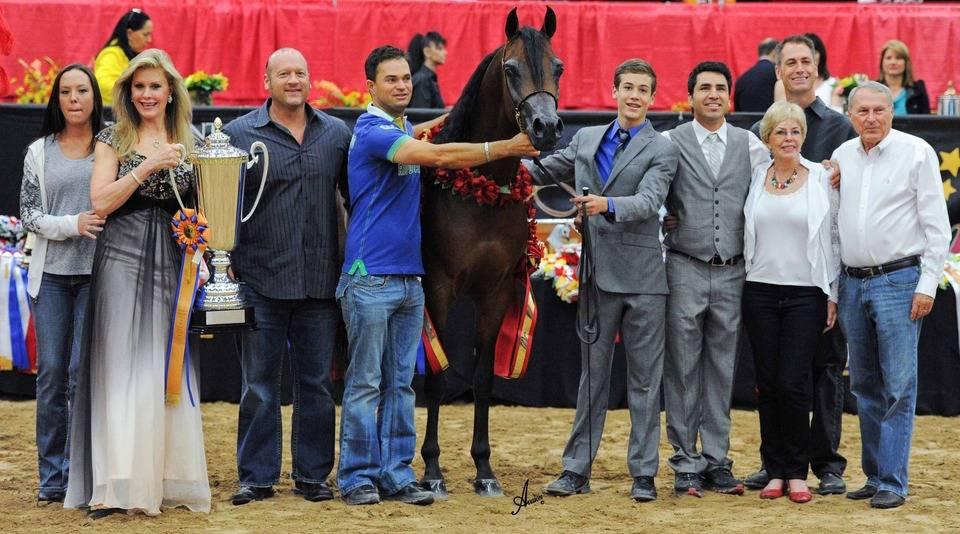 2013 Abwc Champions The Arabian Breeders World Cup