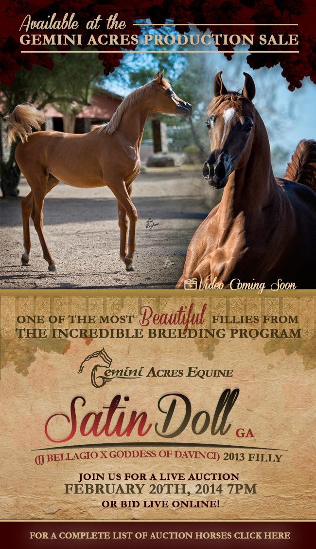Gemini Acres Presents Satin Doll Ga In Their Production Sale I Arabian Horses Stallions Farms Arabians Horses For Sale Arabian Horse Network