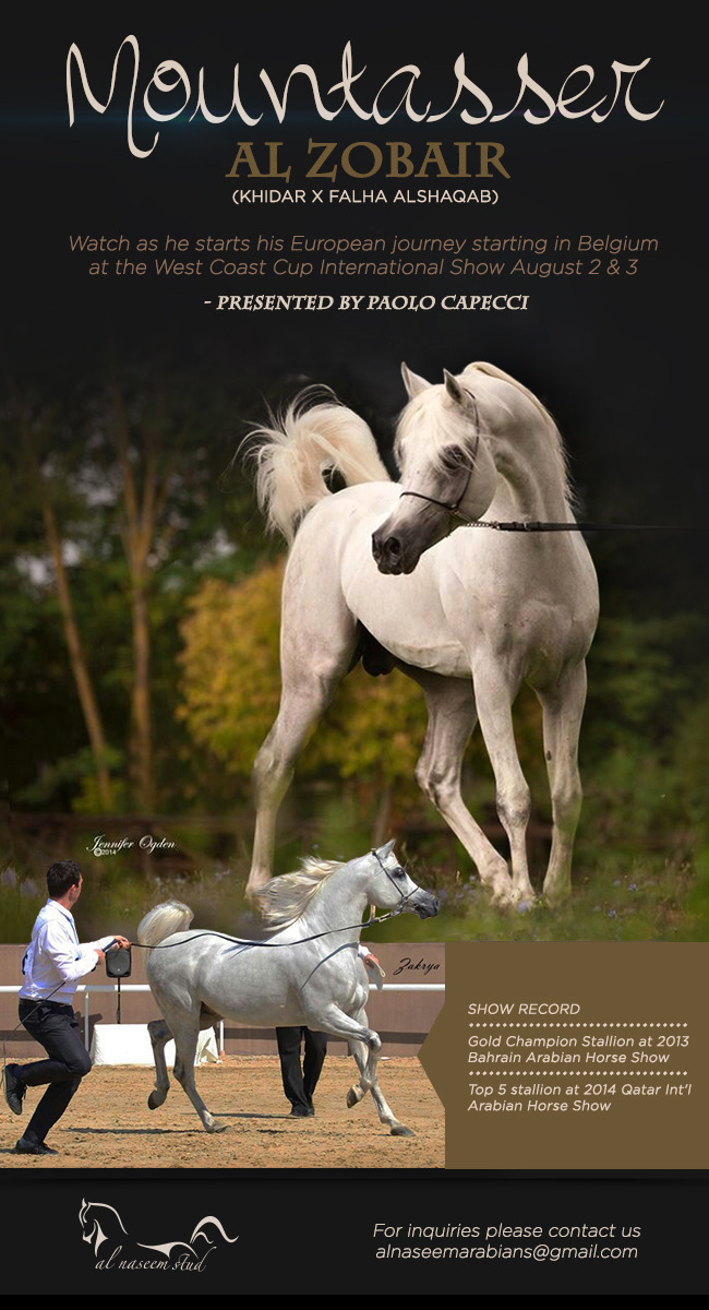 Mountasser Alzobair Is Debuting In Europe Arabian Horses Stallions Farms Arabians Horses For Sale Arabian Horse Network