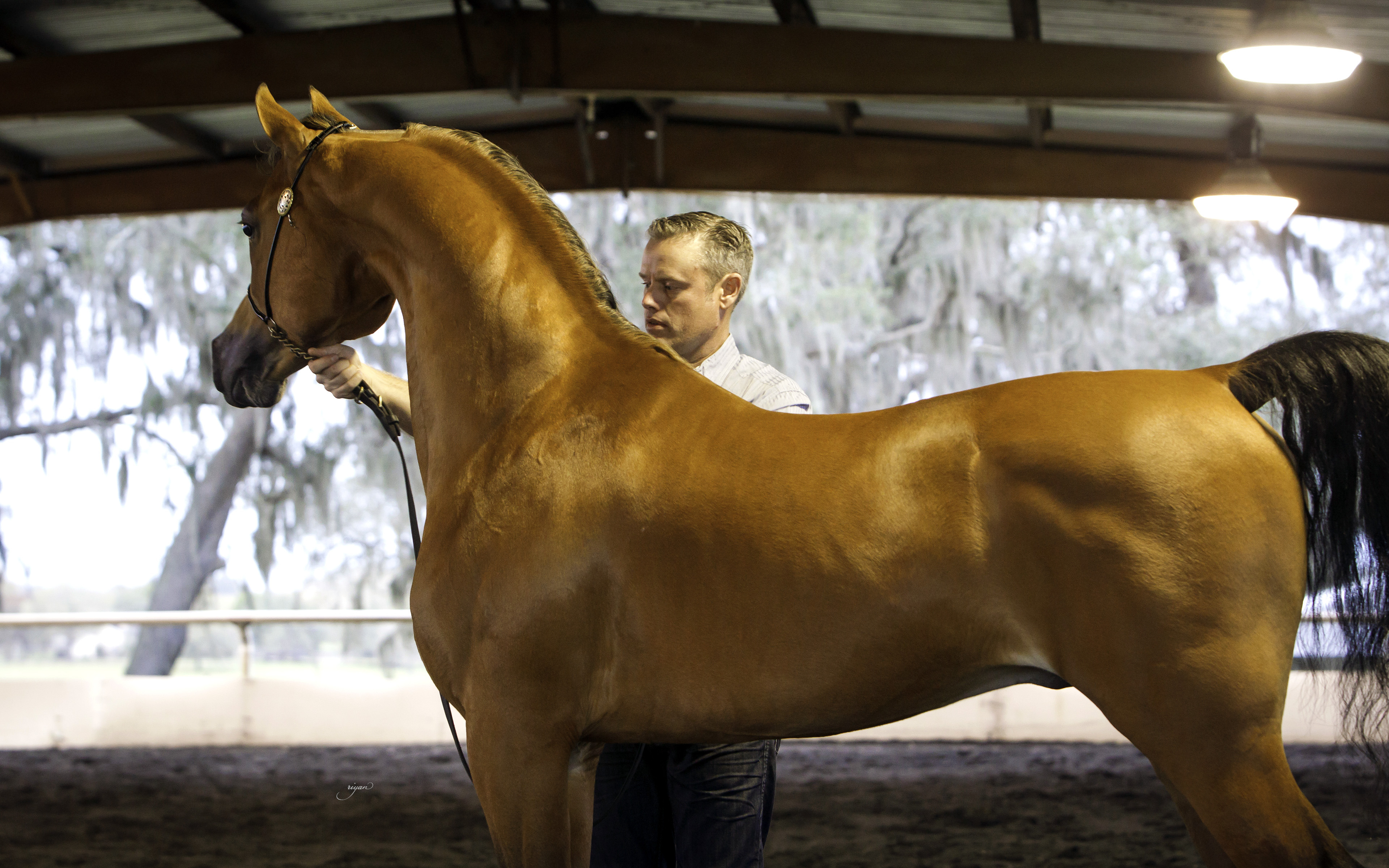 Arabian Horse Days at Wilson Training Center :: Hennessey ... - photo#14