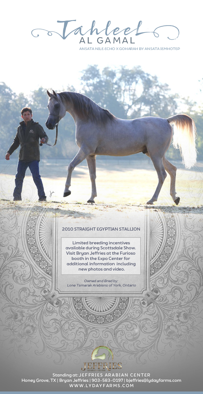 Straight Egyptian Stallion Scottsdale Breeding Incentive Arabian Horses Stallions Farms Arabians Horses For Sale Arabian Horse Network