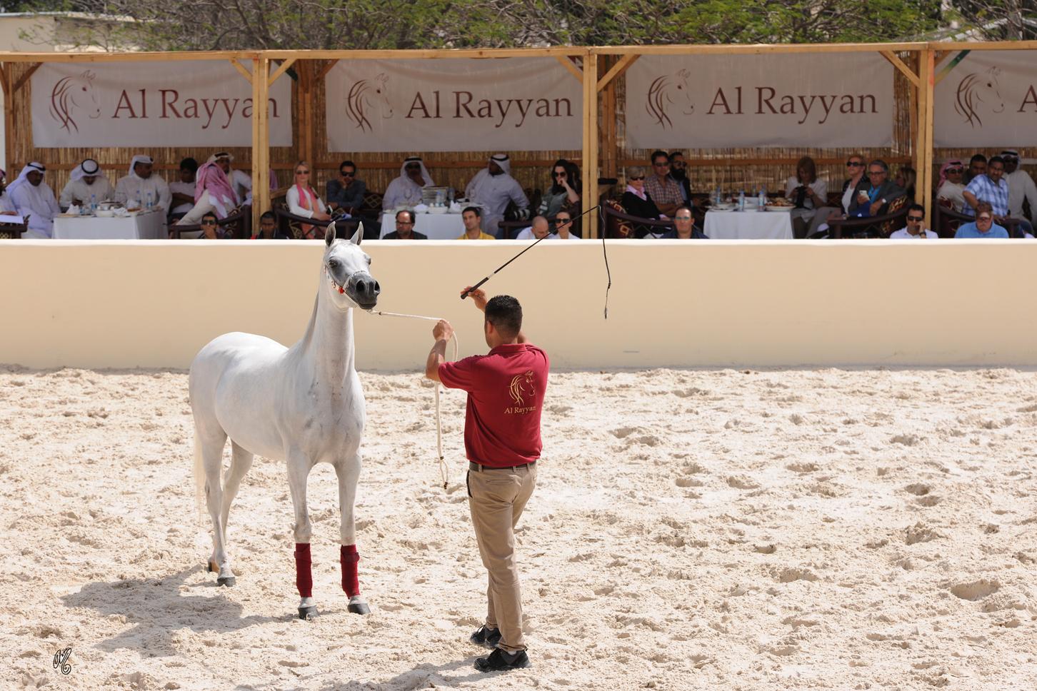 Al Rayyan Presentation