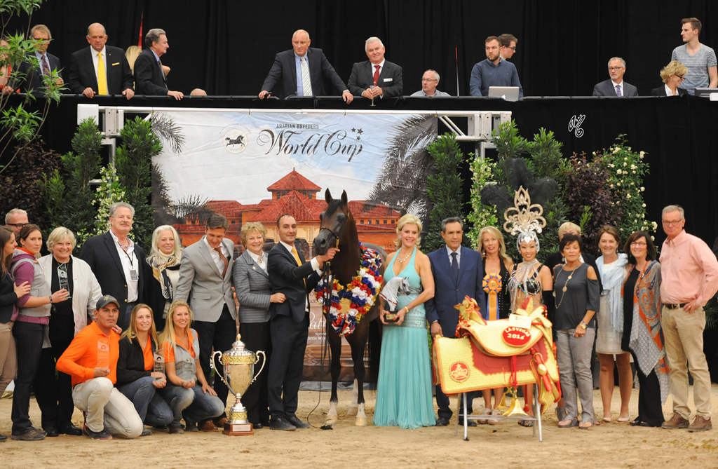 Senior Stallion Gold Champion:  Equator PASB (QR Marc X Ekliptyka)