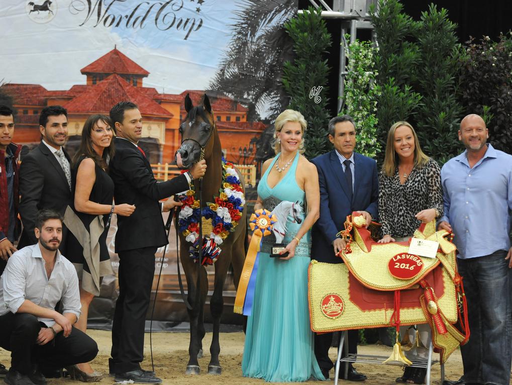 Yearling Colt Gold Champion: Rajj Albidayer (Marajj X Loredonna Z)