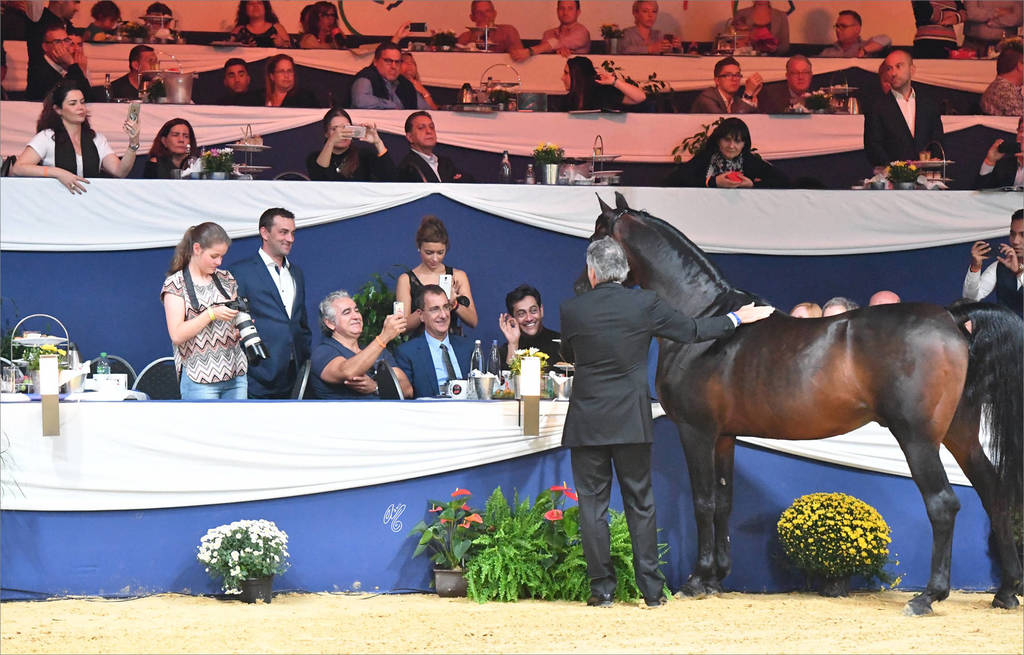 Lifetime Achievement Award for a Horse: Gazal Al Shaqab