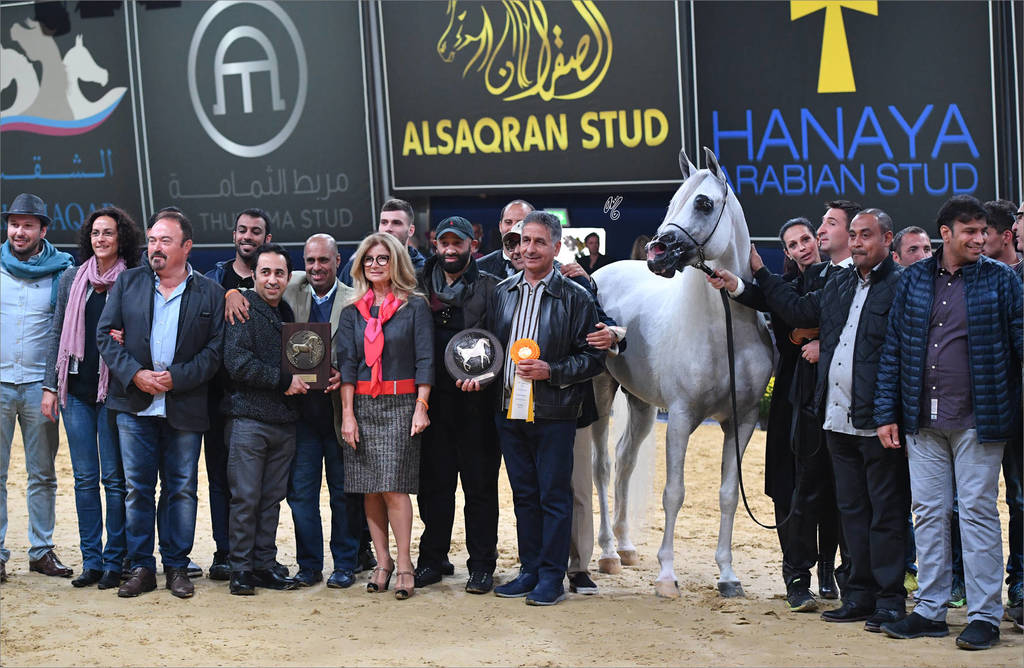 Senior Stallion Gold Champion Excalibur EA (Shanghai EA X Essence Of Marwan EA)