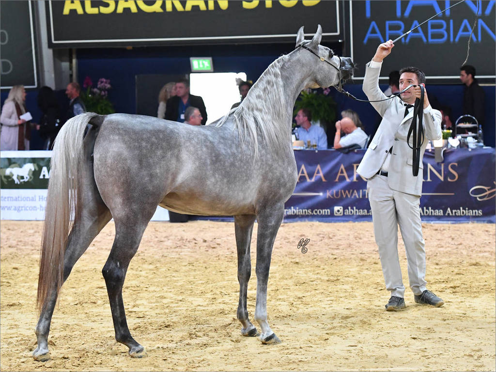 Junior Filly Silver Champion D Ajayeb (RFI Farid X Lady Veronkia)