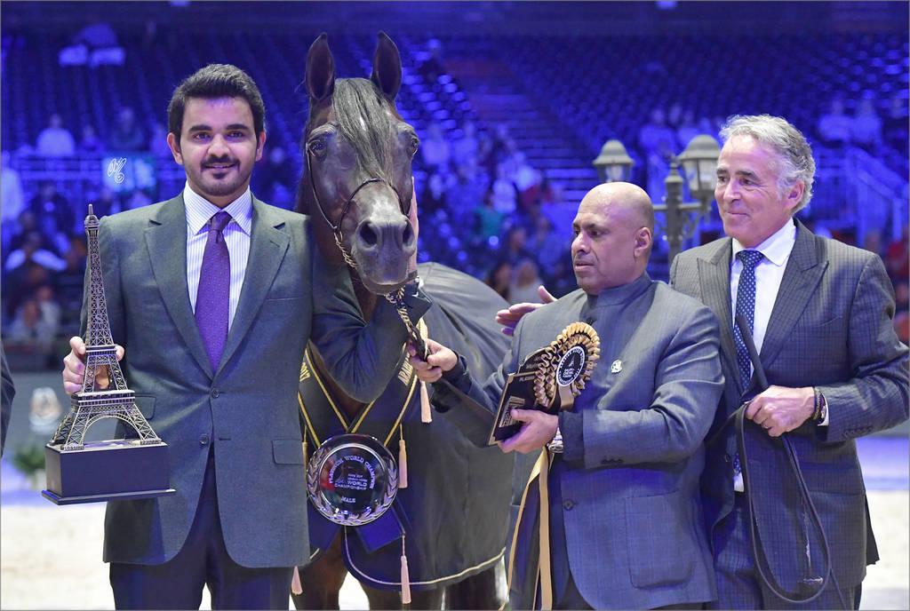 Platinum Champion Stallion: Gazal Al Shaqab (Anaza El Farid X Kajora)
