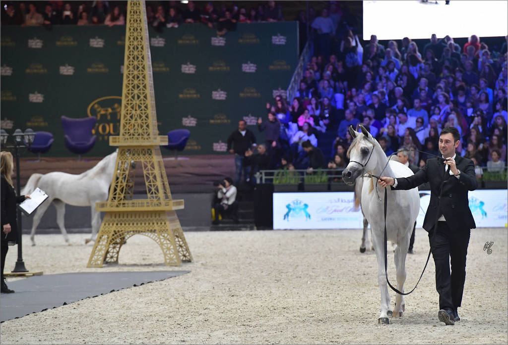 Gold Champion Yearling Female: LR ERA De Excalibur (Excalibur EA X Expected Beauty RP)