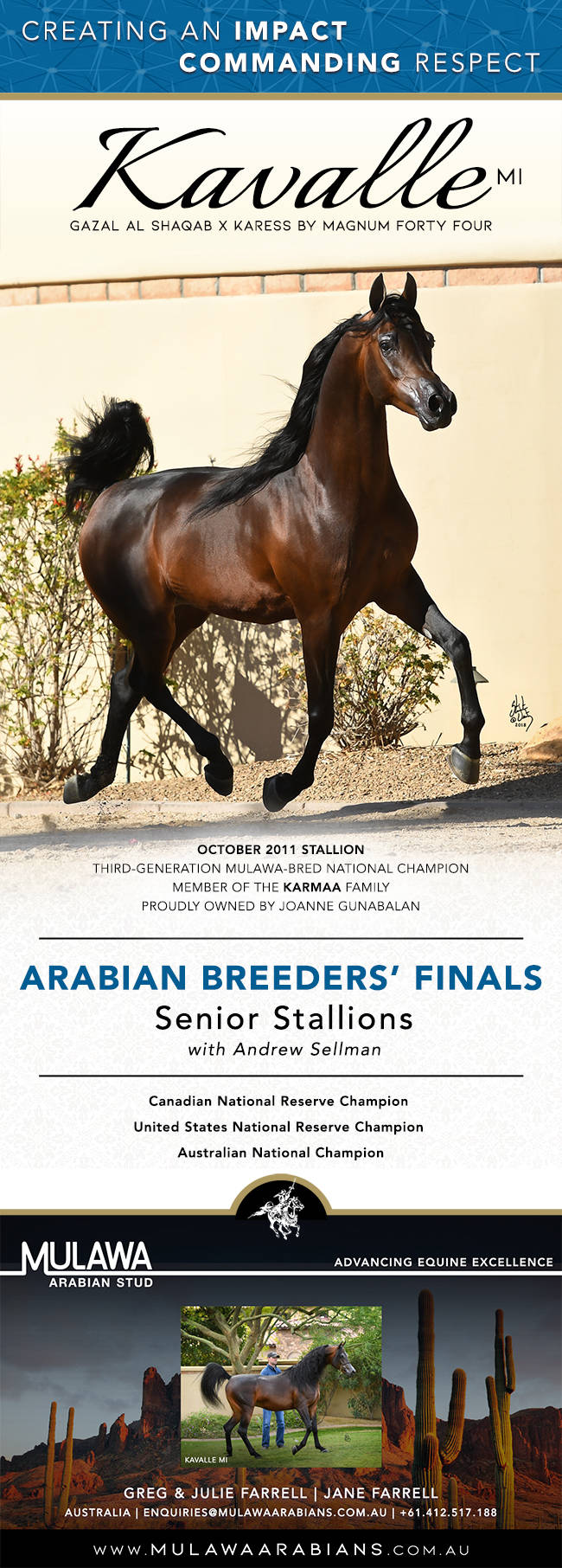 A Charismatic Return Kavalle Mi Andrew Sellman Arabian Horses Stallions Farms Arabians Horses For Sale Arabian Horse Network