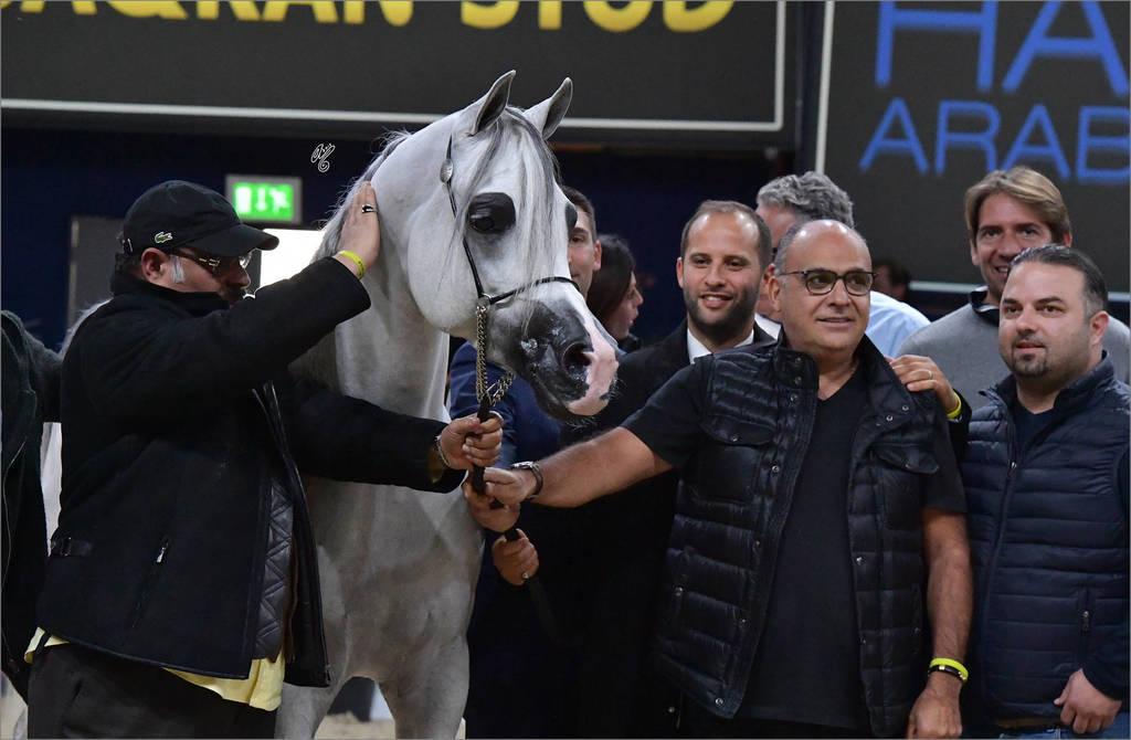 Senior Stallion Gold Champion: E.S. Harir ( AJ Dinar X TF Magnums Magic)
