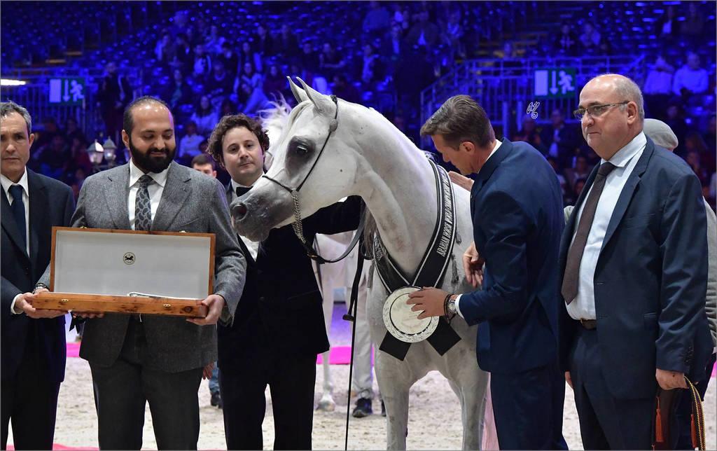 Senior Mare Silver Champion: Om El Aisha Aljassimya