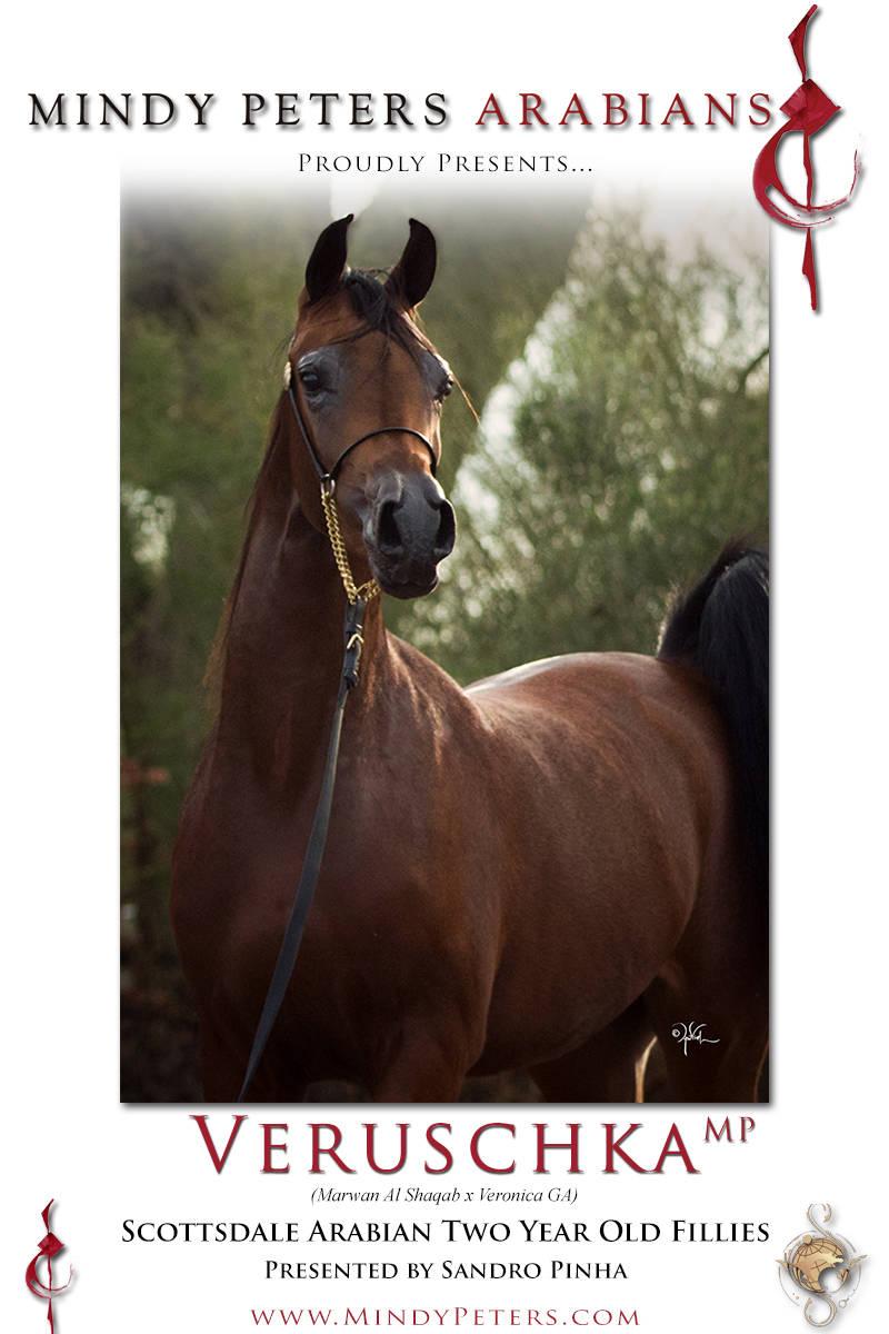 Veruschka Mp A Beautiful Daughter Of Veronica Ga Arabian Horses Stallions Farms Arabians Horses For Sale Arabian Horse Network