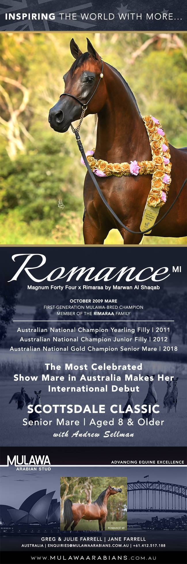 Arabian Aristocracy Three Time Australian National Champion Romance Mi Arabian Horses Stallions Farms Arabians Horses For Sale Arabian Horse Network