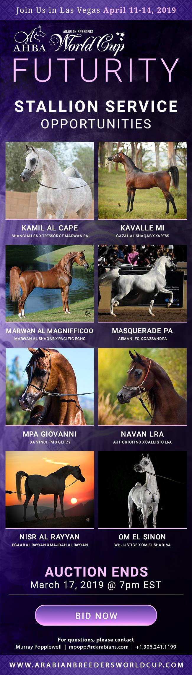Beautiful Future Arabian Horses Stallions Farms Arabians Horses For Sale Arabian Horse Network