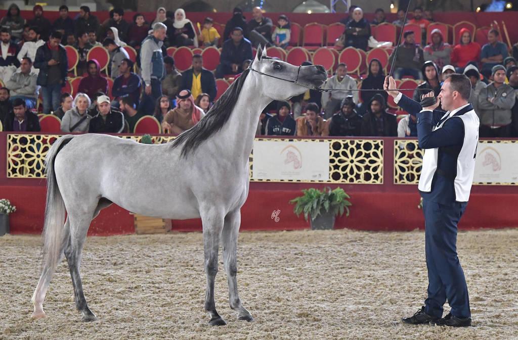 Peninsula Junior Filly Bronze Filly: Al Ghashamiya Al Rayyan (Al Adeed Al Shaqab X Mardyah Al Rayyan)
