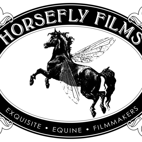 Feature News Arabian Horses Stallions Farms Arabians For Sale