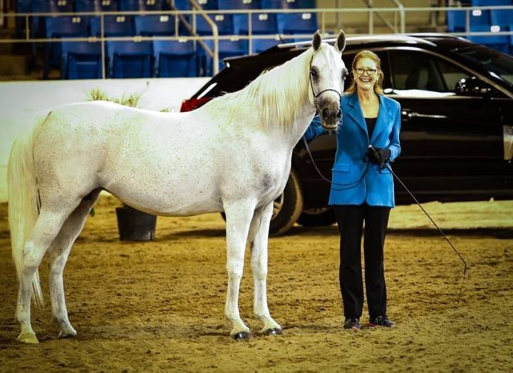 Deb's first time in the ring... Showing Divine Chance SA in the OPEN mare class.