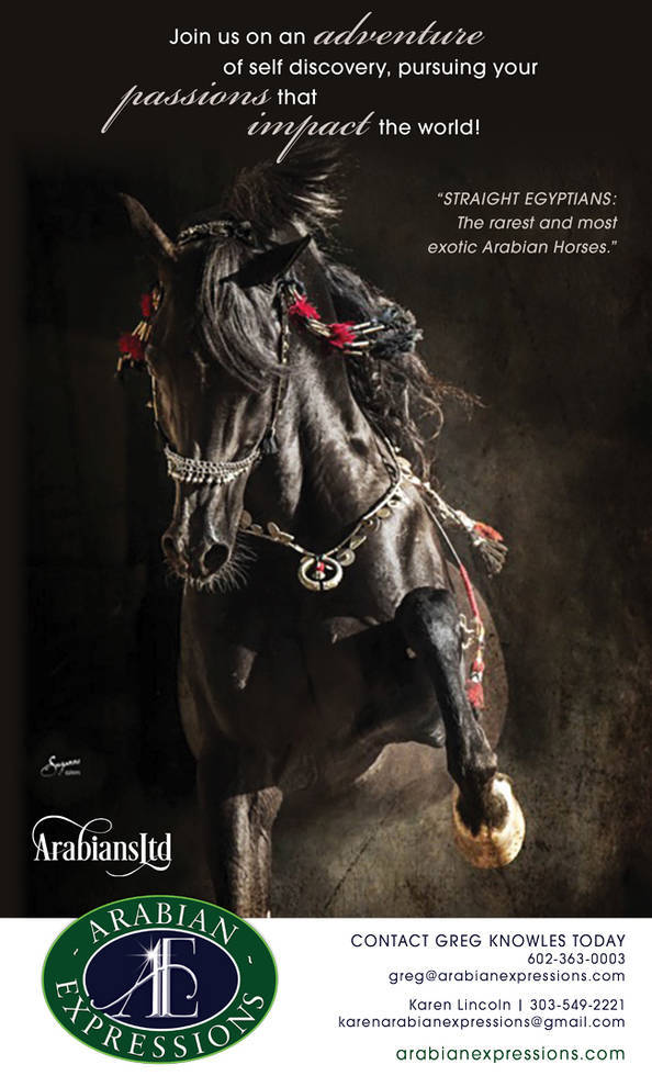 Come on an Adventure with the Arabian horse