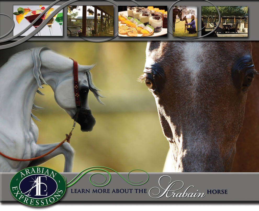 AE hosts the ArabHorse Farm Tour