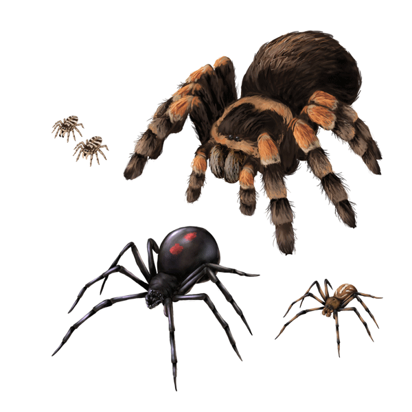 Хоть пауки и весьма пугающие,