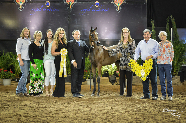 Arabian Breeder Finals Bronze Champion Weanling filly