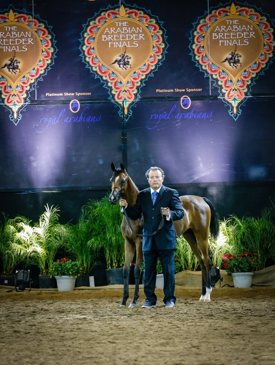 Giselle Rae - Bronze Champion Weanling Filly