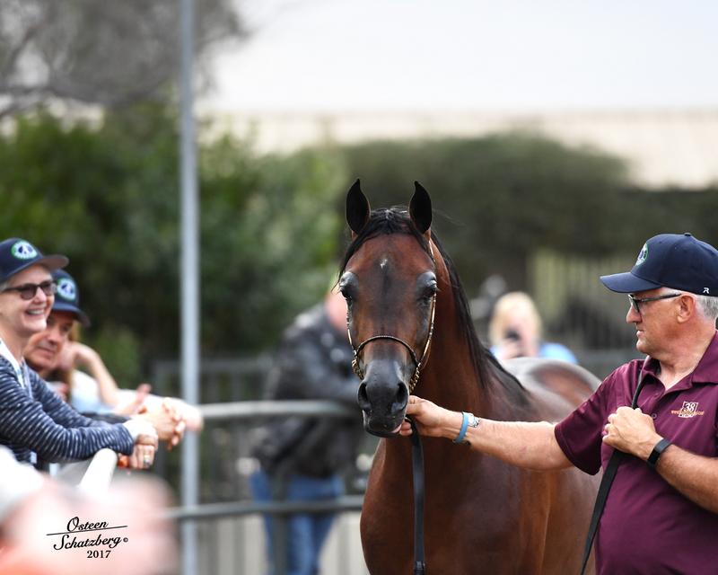 Arabians LTD Open house at Arabian Expressions