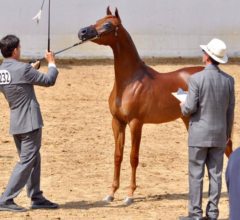 Our Mare Jazella FA produces Champion Babies