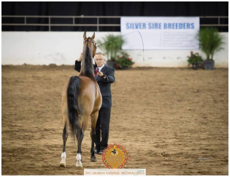2017 Arabian National Breeders Finals Results