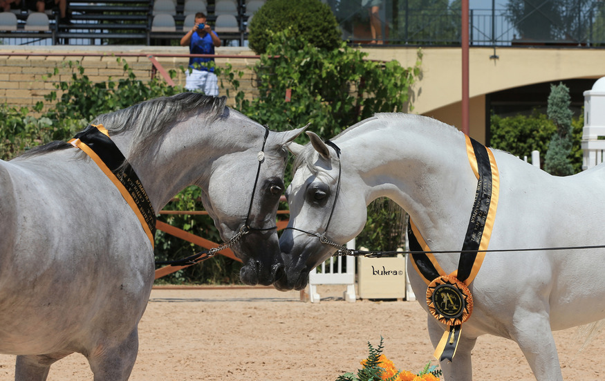 The World Famous Arabian Horse Page 3