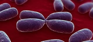 Wie entstehen Gendefekte?