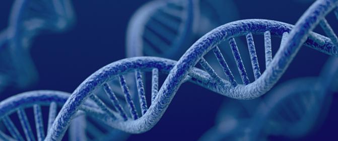 Präventivgenetik